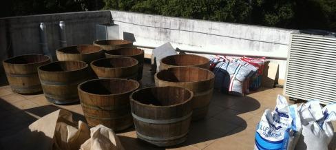 the wine barrels for the garden arrive in Glebe