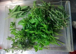 a harvest of fresh herbs from the rooftop garden