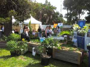 Taste of Sydney's Sustainable Living Garden presented by Urban GreenSpace and Growing Local Urban Permaculture Workshops