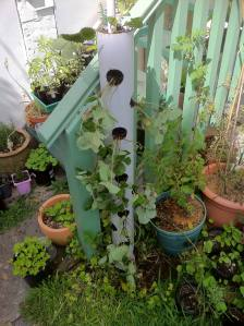 freshly planted strawberry tower in position
