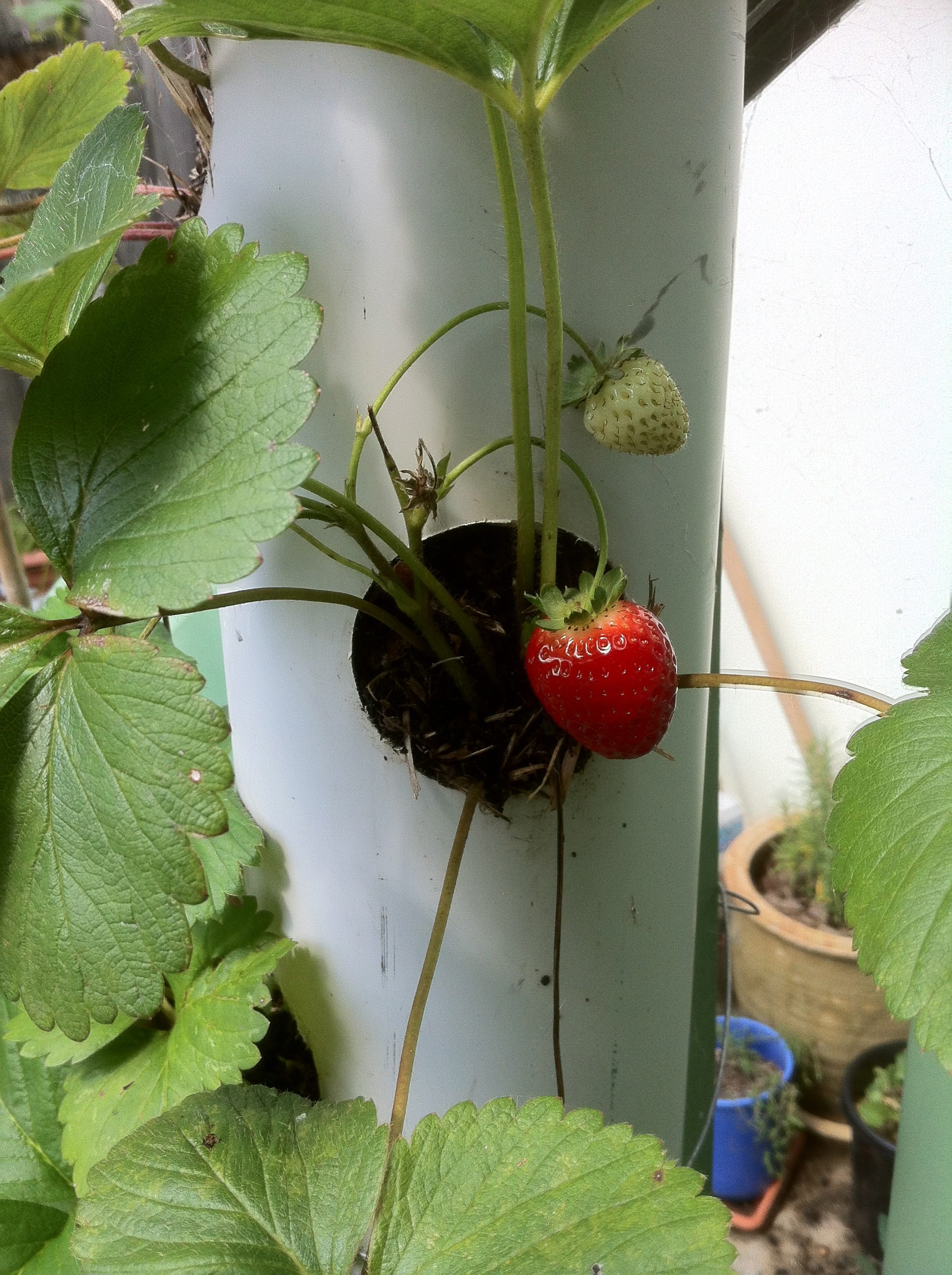 Vertical beds for strawberries from plastic bottles. Handmade high beds for strawberries 20