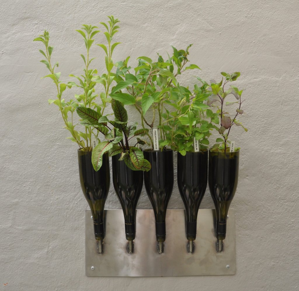 Upcycled wine bottles make a graceful vertical herb garden